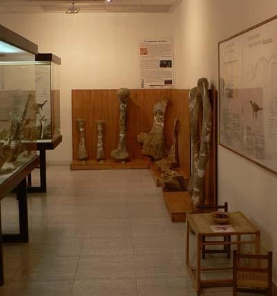 exc10_museopaleontolologico